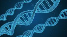La función principal del ADN es el almacenamiento de información para construir otros componentes de las células.