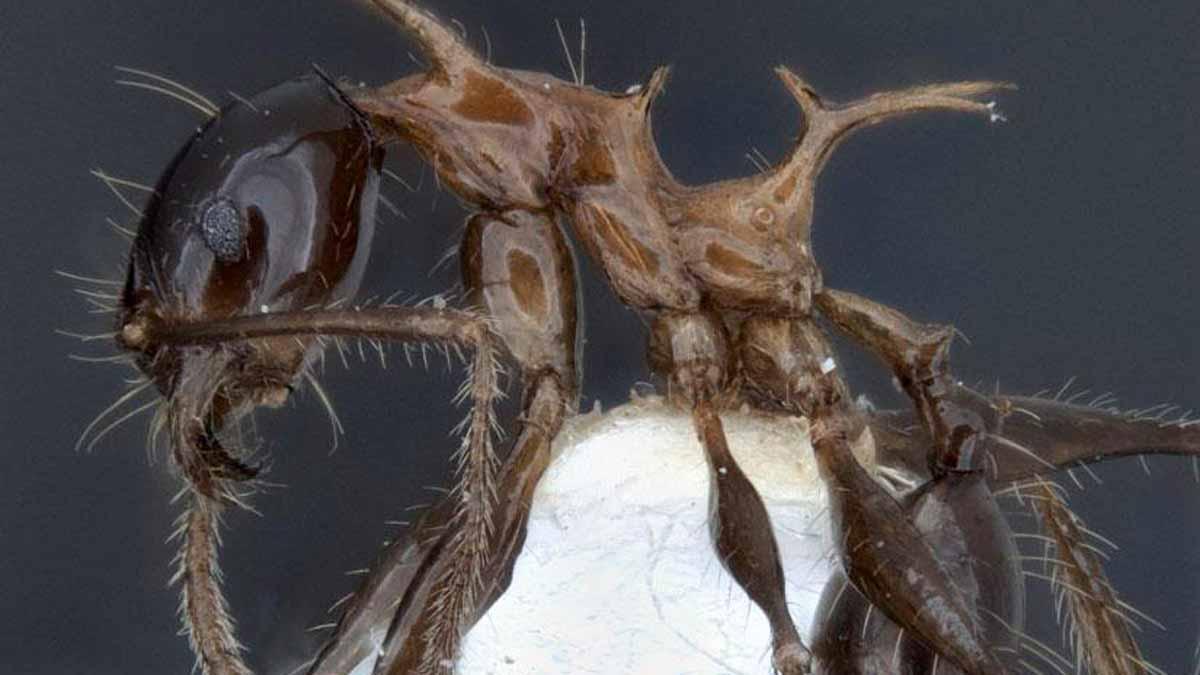 Los 5 animales más curiosos que acaban de descubrirse