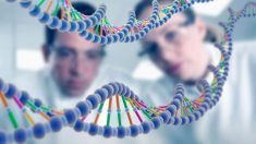 ¡Increíble pero cierto! Se puede obtener una foto a partir del genoma (3)