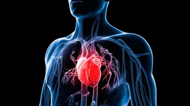 organos vitales lado siniestro espécimen humano