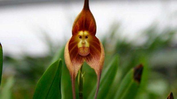 Las 5 Flores Mas Parecidas A Los Animales Que A Las Plantas