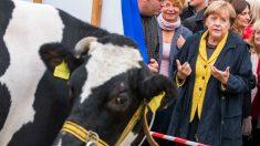Angela Merkel, cerrando campaña en la isla báltica de Lauterbach. (AFP)