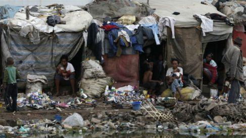 Brote de peste. (Foto: Madagascar Foundation)