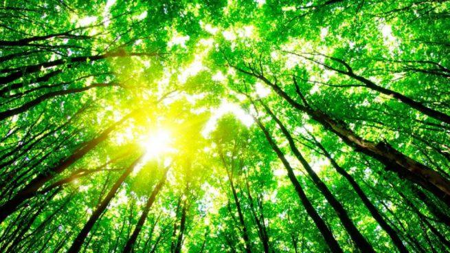 La Comisión Europea movilizará un billón de euros en inversiones verdes