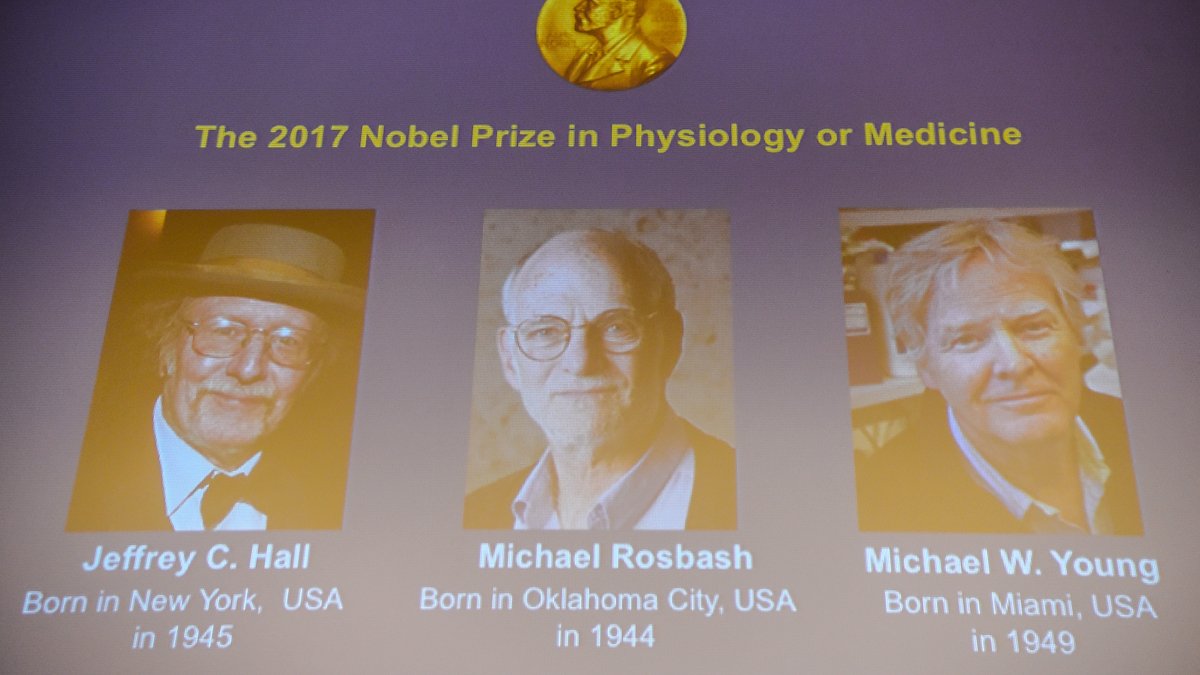 Jeffrey Hall, Michael Rosbash y Michael Young, distinguidos con el Premio Nobel de Medicina 2017. (Foto: AFP)