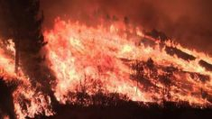 El fuego arrasa en Asturias el mayor robledal de Europa, en Muniello.