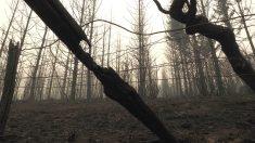 Vista de las fincas calcinadas de Vilarello (Lugo), una de las aldeas que peligraron por el fuego de los incendios forestales declarados en Galicia (Foto: Efe)