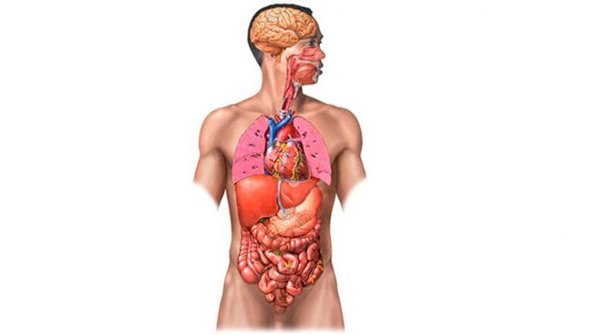 Los 5 órganos Sin Los Que Podrías Vivir Perfectamente