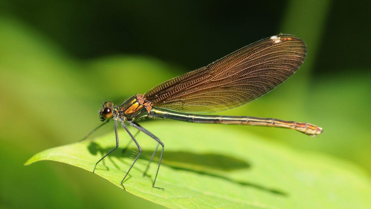 Animales invertebrados: Características y clasificación