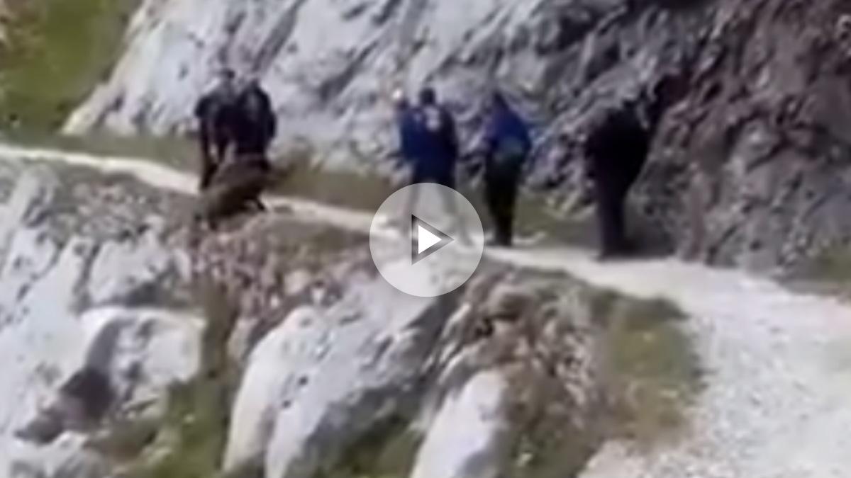 Unos excursionistas despeñan a un jabalí por un barrando de los Picos de Europa sin motivo.