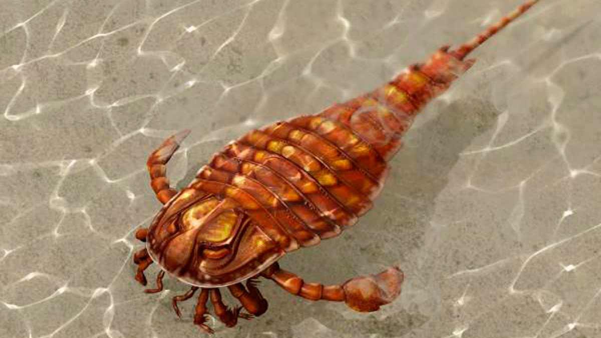 Un animal prehistórico del que se conocen escasos datos