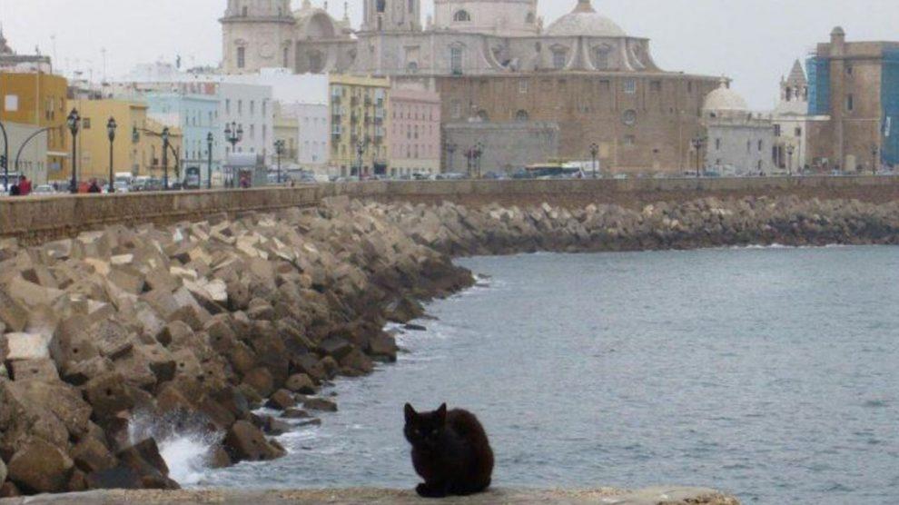 Un gato callejero en Cádiz.