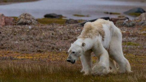 El fotógrafo Paul Nicklen es el autor de tan desoladoras imágenes.