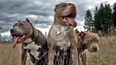 Los 5 perros más agresivos con los que debes tener cuidado