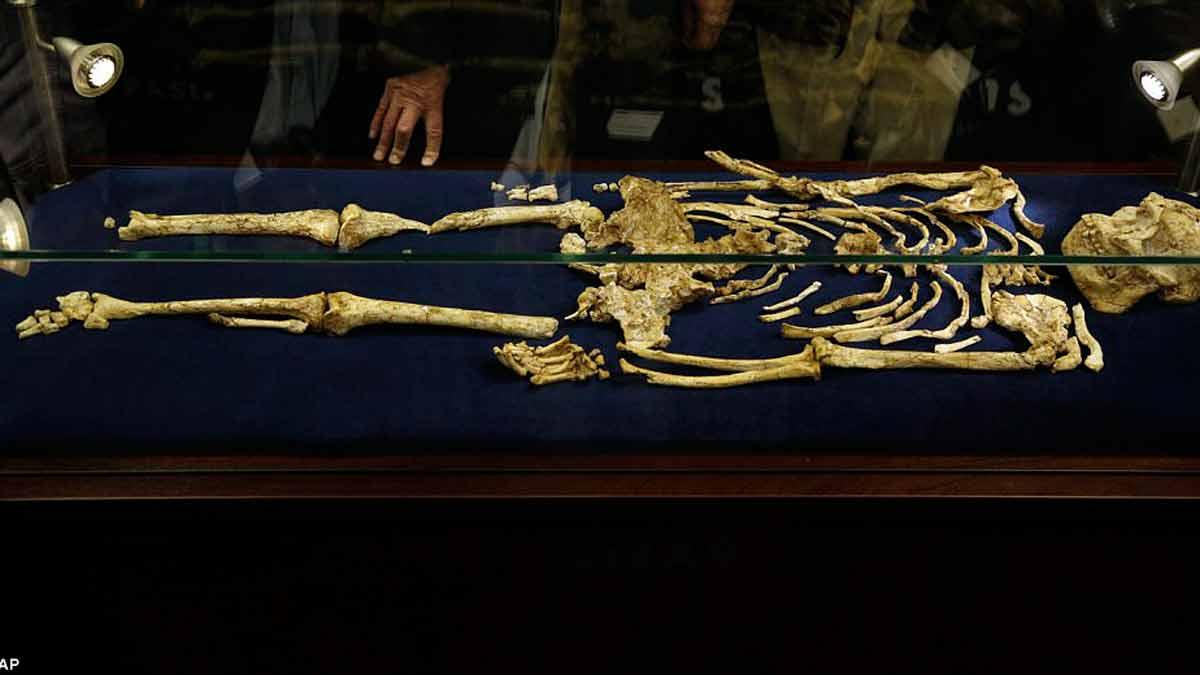 Los restos de Little Foot son se muestran al mundo como un hallazgo impresionante