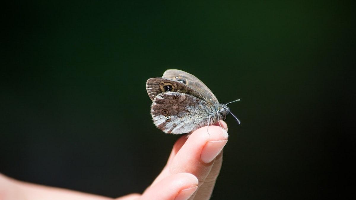 Descubre la enfermedad de la piel de mariposa