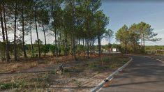 Bosque de Tosse, en Las Landas (Francia), donde se ha encontrado el zulo de ETA.