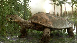 Las tortugas son uno de los animales más antiguos de la Tierra