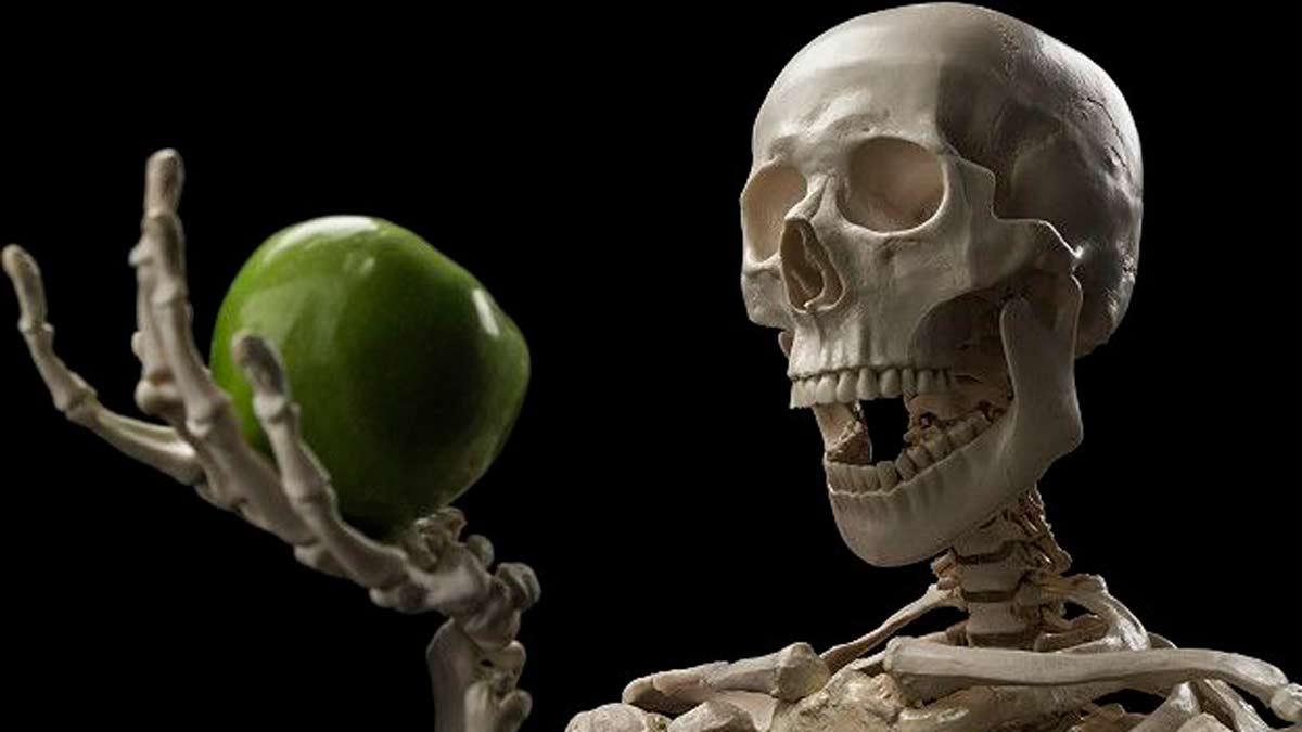 El apetito y su relación con los huesos