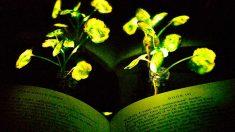 Las plantas que sustituirán la iluminación convencional