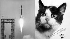 La primera gata en el espacio. Imagen de la campaña de Kickstarter