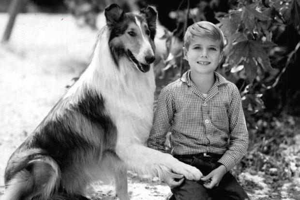 5 perros famosos