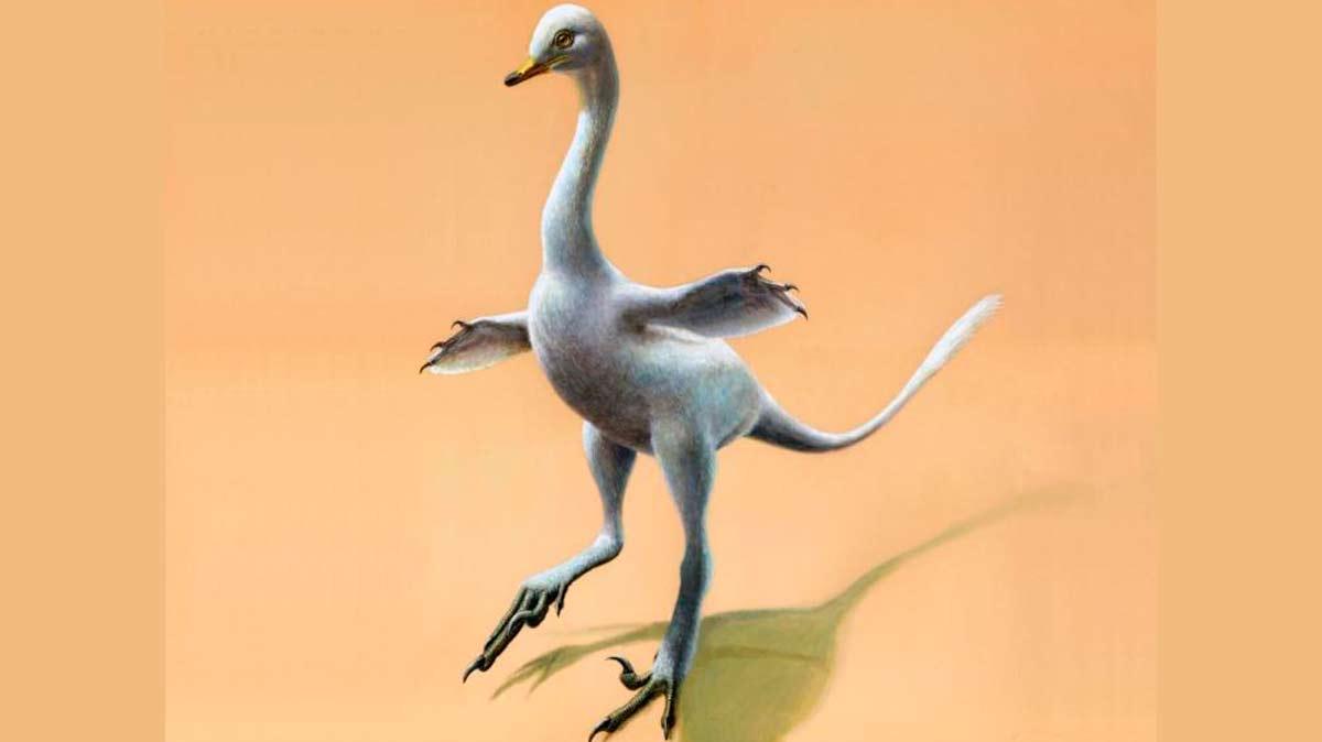 Un dinosaurio con cierto parecido a los cisnes