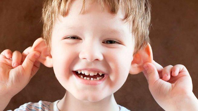 La regeneración de orejas es posible a través de células humanas