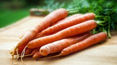 La zanahoria se originó en Asia Central, desde donde se extendió a Europa y al resto del mundo.