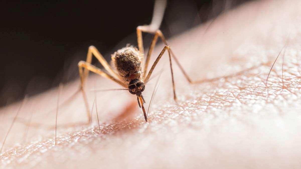 Cada tipo de mosquito puede tener diversos efectos