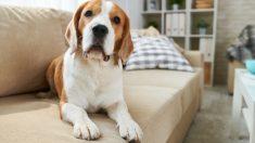 Pasos para educar a un perro