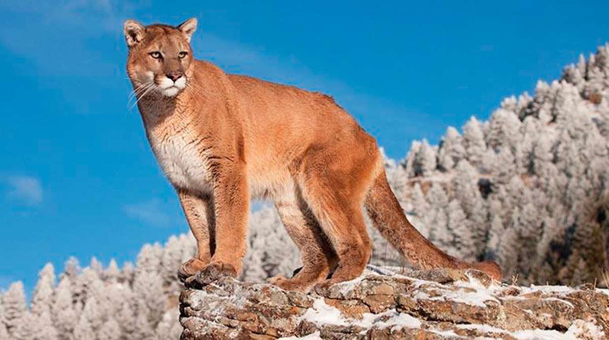 El primer animal extinto de este año
