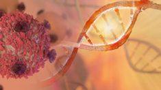 La inmunoterapia se ha probado en ratones y ha conseguido eliminar el cancer de colon.