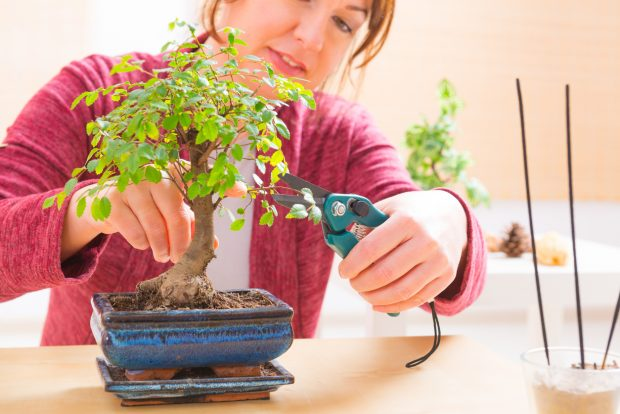 Cómo cuidar un bonsái paso a paso