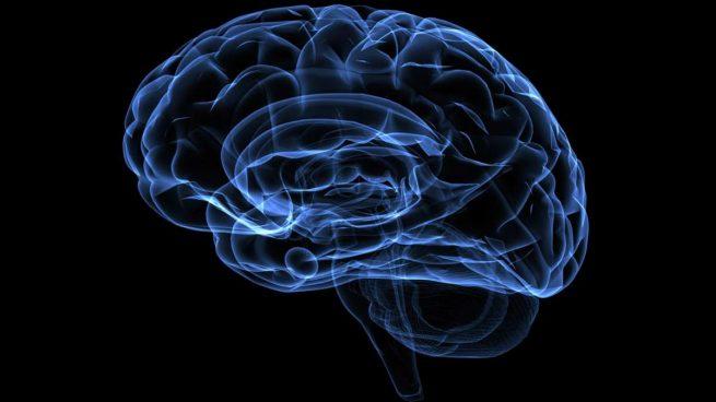 Cerebros transparentes