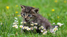 Un hilo de Twitter en el que @cernunna descubre algunas razas de gatos de lo más sorprendentes se hizo viral en las redes sociales hace unos días