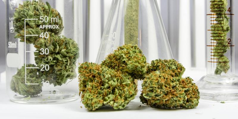 La misteriosa enfermedad que afecta al consumo de marihuana.