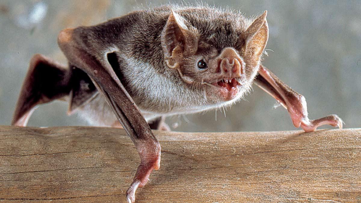 Un animal tan interesante como terrorífico