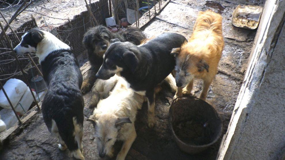 Algunos de lo perros en mal estado decomisados en Pontons (Barcelona) por la Guardia Civil y los Agentes Rurales de la Generalitat.