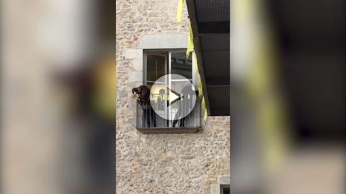 Funcionarias de la Generalitat ponen lazos en su jornada laboral