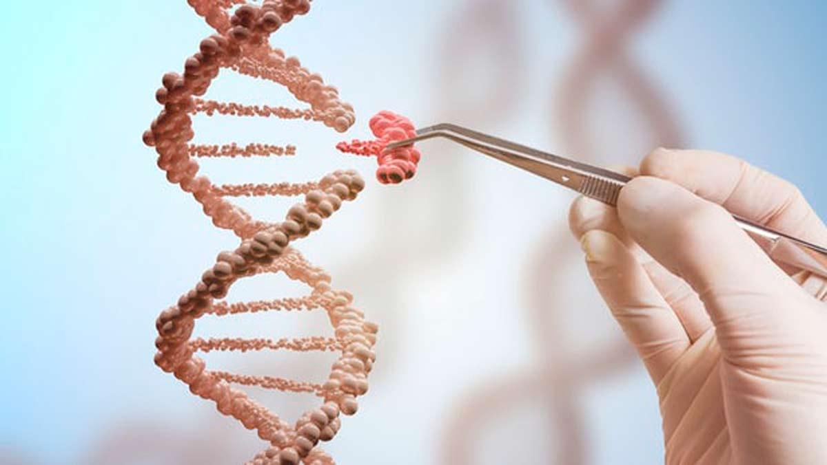 Un estudio que puede mejorar el tratamiento de numerosas enfermedades