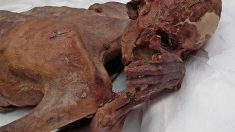 Descubren los tatuajes figurativos más antiguos en una momia egipcia (1)