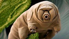 Uno de los animales más resistentes del mundo