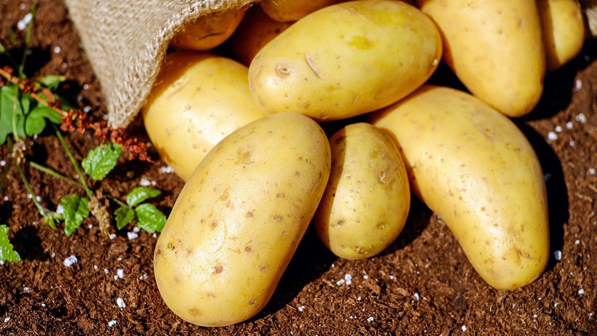 ¿Se pueden sembrar patatas en Marte?