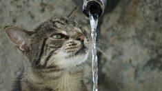 Agua y gatos, una relación complicada