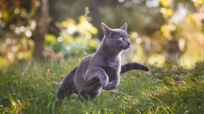 C mo ahuyentar gatos con remedios caseros y sin hacerles da o for Ahuyentar gatos jardin