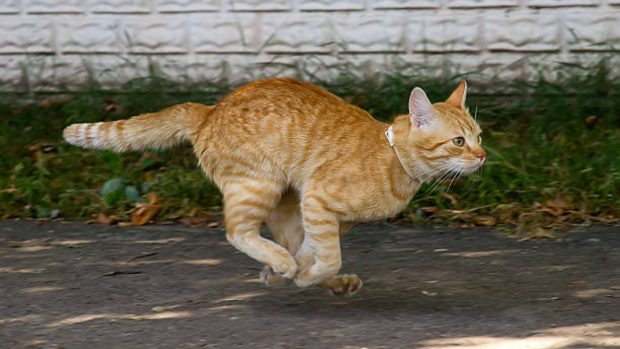 C mo ahuyentar gatos con remedios caseros y sin hacerles da o for Como ahuyentar gatos del jardin