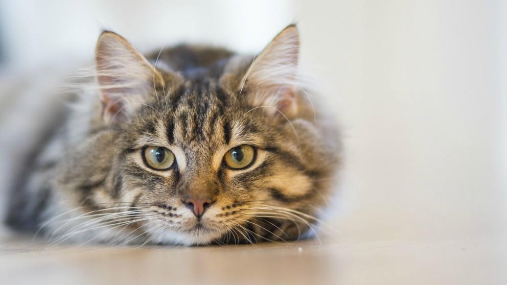 La esperanza apunta a la toxoplasmosis propia de los gatos.