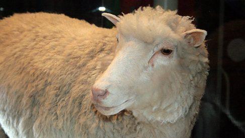 Una representación de la oveja Dolly