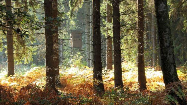 Murcia será la sede nacional del Día Internacional de los Bosques en 2021